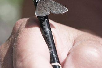 Schmetterling auf einem Stift