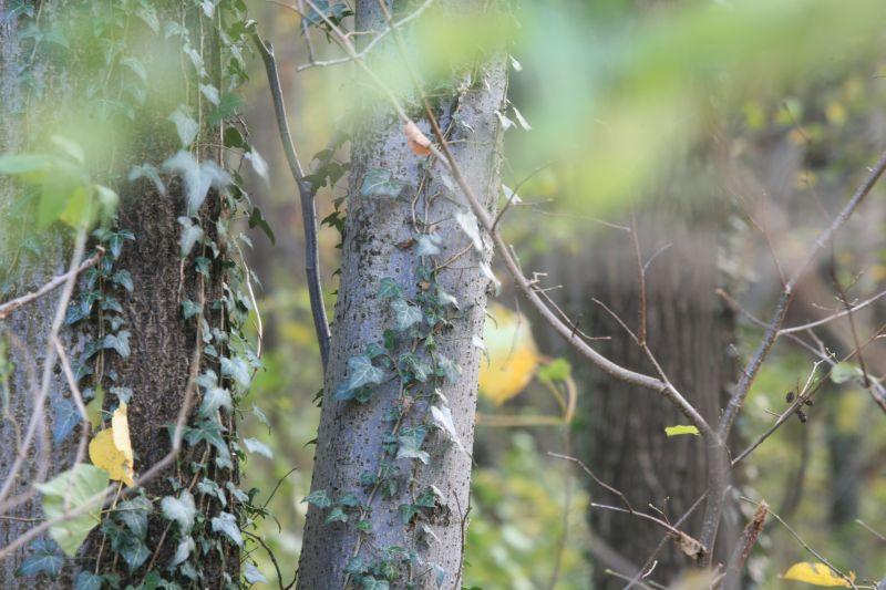 Bäume im Friedwald